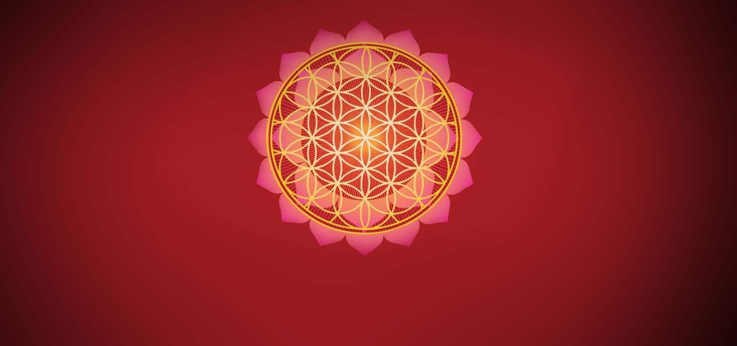 Lotusul – Floarea Spiritualitatii
